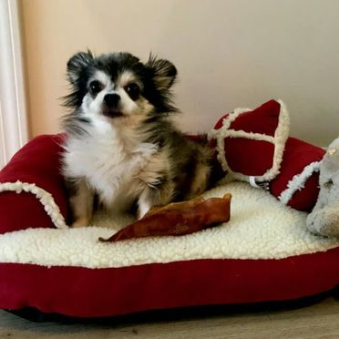 Dog sitting in his bed